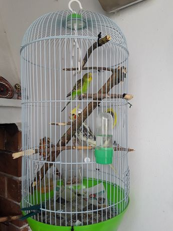 Gaiola com caturra e periquito verde e amarelo