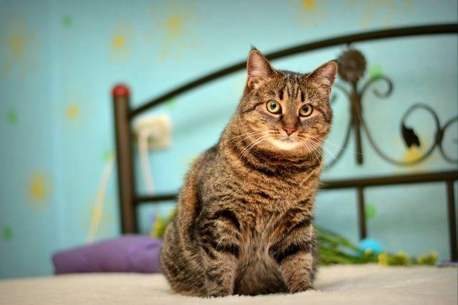 Прекрасной кошечке нужен дом! Кошка в добрые ручки