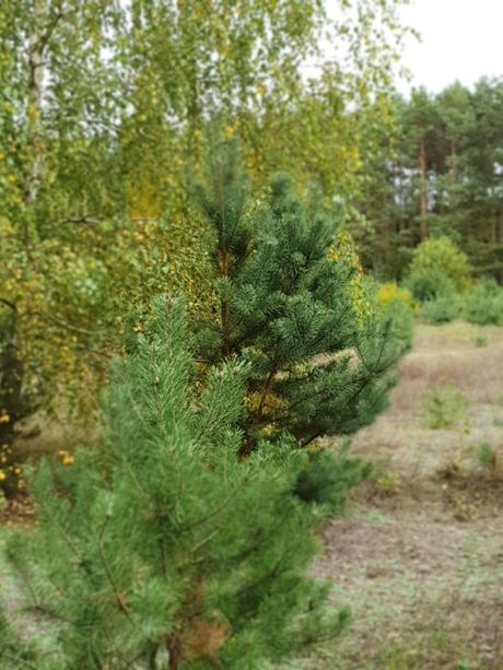 działka z własnym lasem okolice Tuszyna