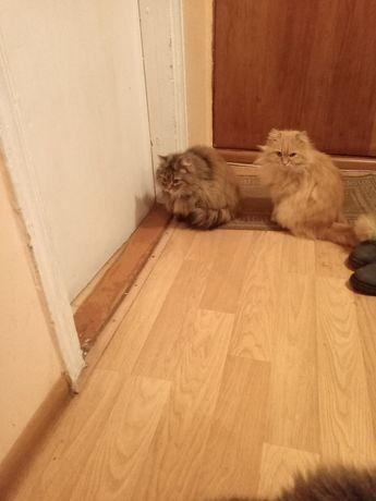 Коти хороші слухняні