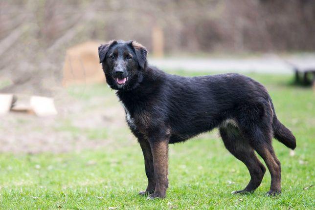 Отдам в хорошие руки крупную молодую собаку Ризи.