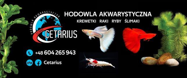Krewetki Ryby Ślimaki już od 1 zł. Legnica. Cetarius