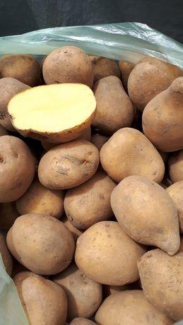 Картопля, бульба на вареники