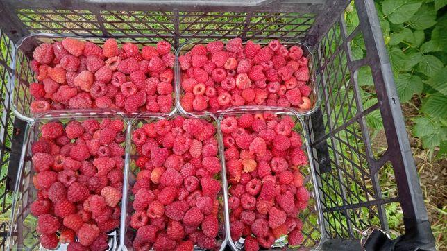 Услуга сушки ягод,овощей,гребов,т.д
