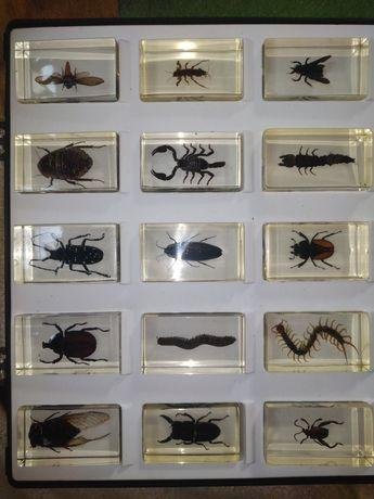 Kolekcja owadów w żywicy
