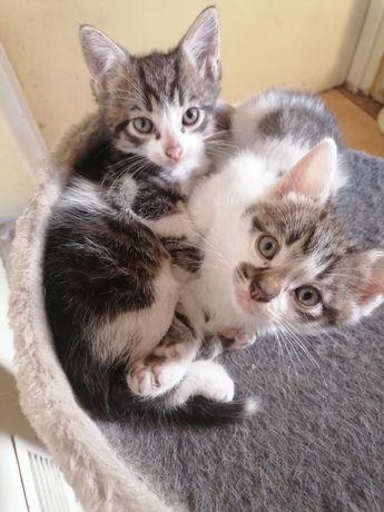 Kociaki szukają dobrego domu