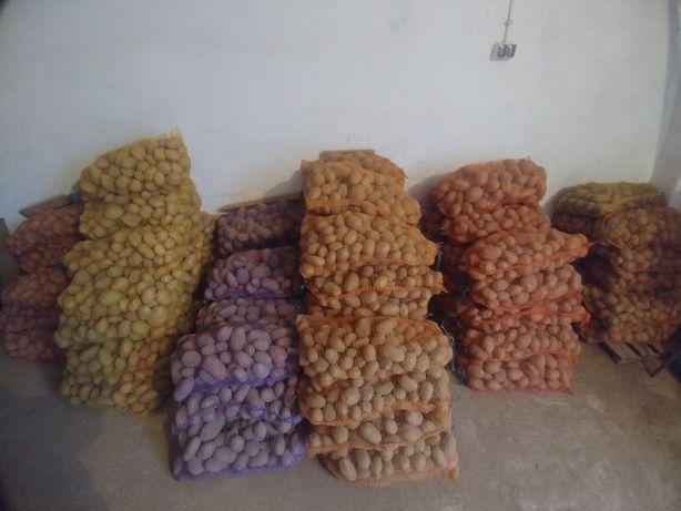 Ziemniaki jadalne Elfe, Quenn Anne, Toscana, Lilly, Labella. Transport