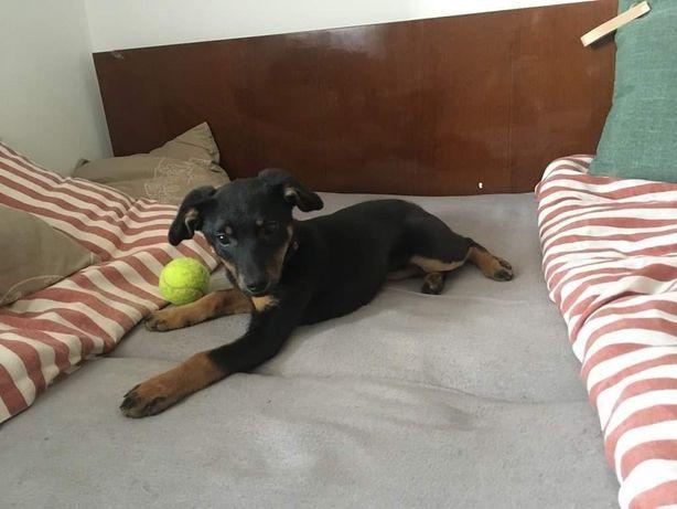 3-miesięczna Nandi do adopcji!