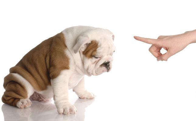 Zaklinacz psów - psi behawiorysta, trener, psycholog