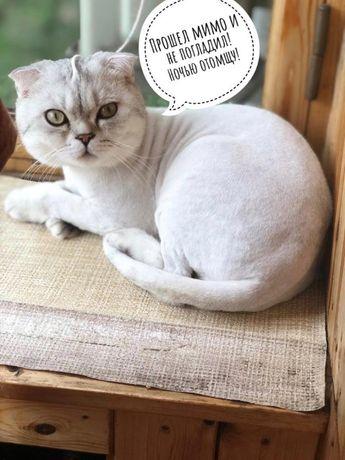 Стрижка котов с выездом на дом, без наркоза!