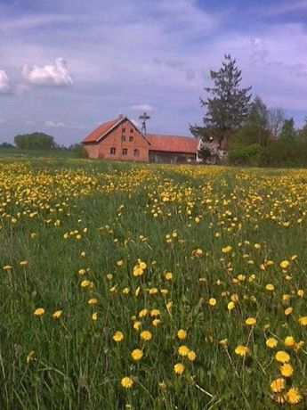 Gospodarstwo  rolne 16,85 ha (oferta cenowa tylko do 21.09.2021)