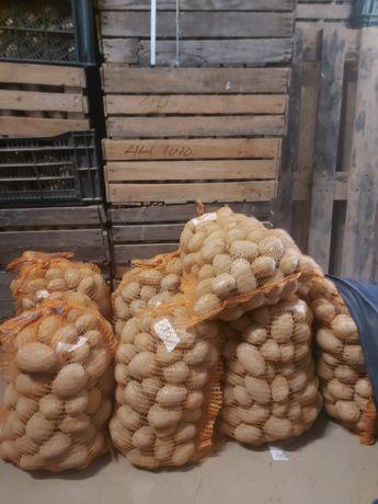 Ziemniaki jadalne, sadzeniak i paszowe