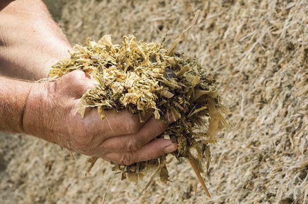 Kiszonkę z kukurydzy (z pryzm) zakupię Chełm - image 1