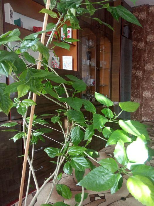 Комнатные цветы Славянск - изображение 1