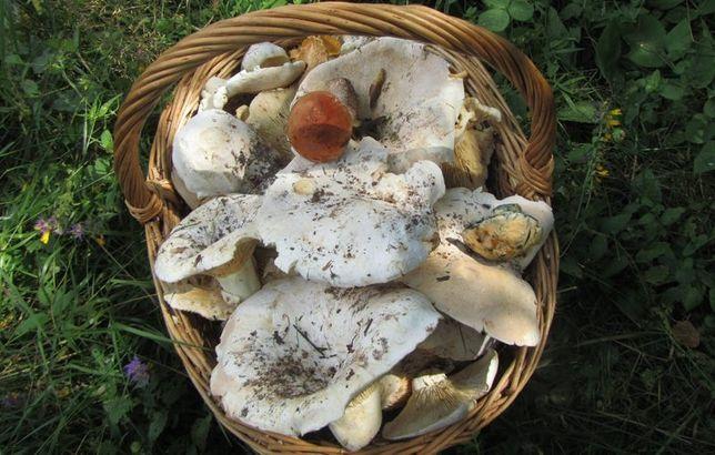 Продам соленые грибы грузди