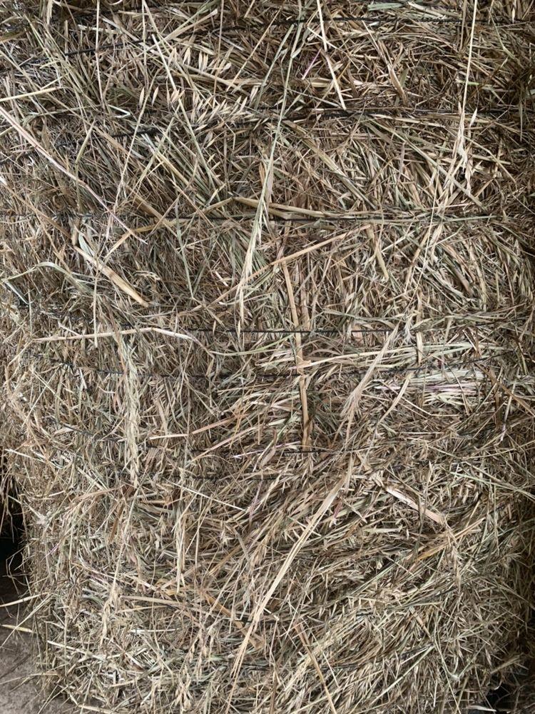 Feno semeado