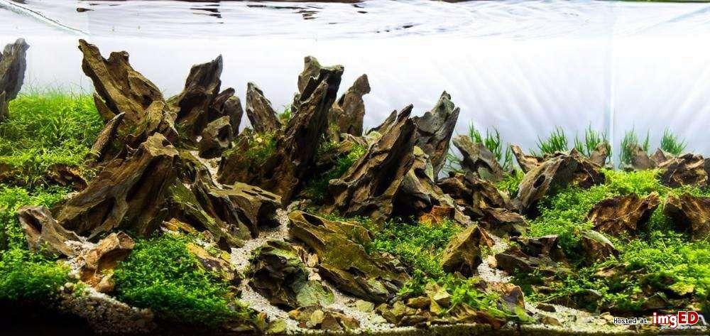 Dragon stone do akwarium 1kg. Katowice - image 1