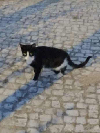 Gatinha preta e branca