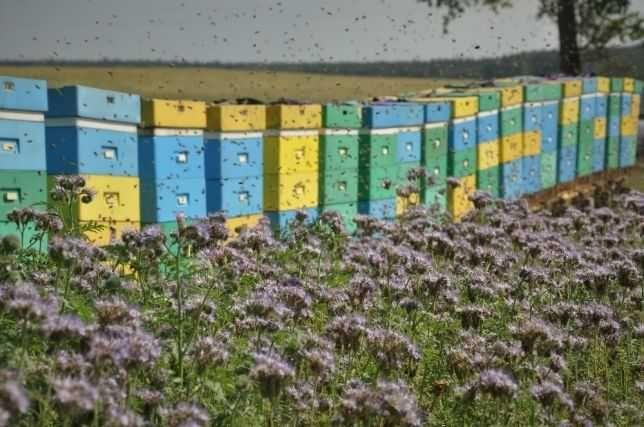 Pszczoły.Kurs Pszczelarski dla Początkujących 2022