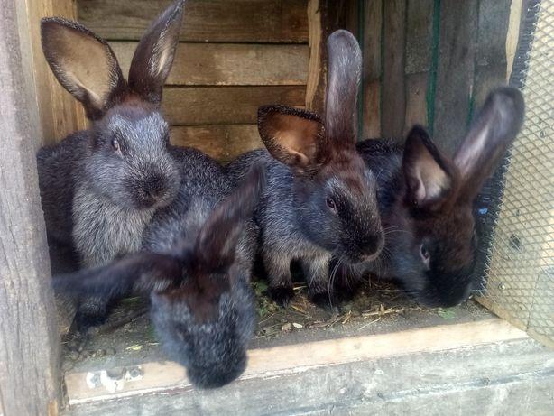 Продам домашних кроликов!