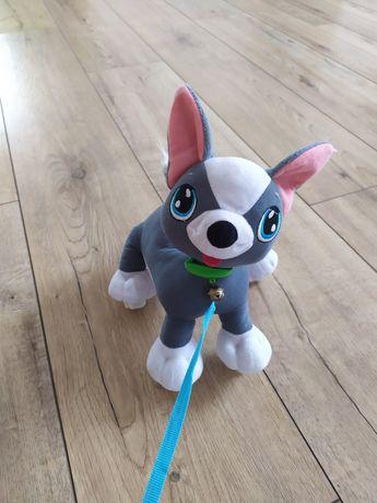 Piesek Boogi dla dzieci