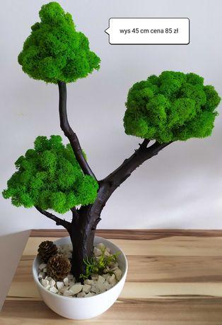 Drzewko bonsai na pniu z mchem chrobotkiem fińskim