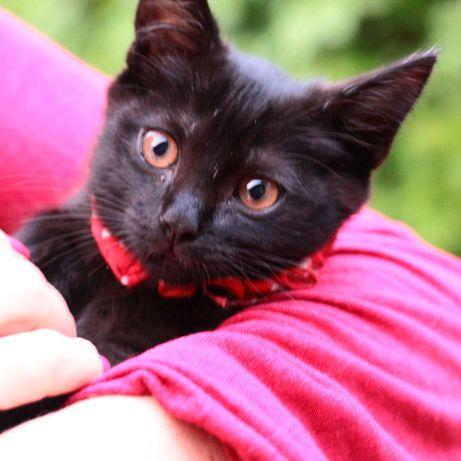 подарим красивых чёрных котят