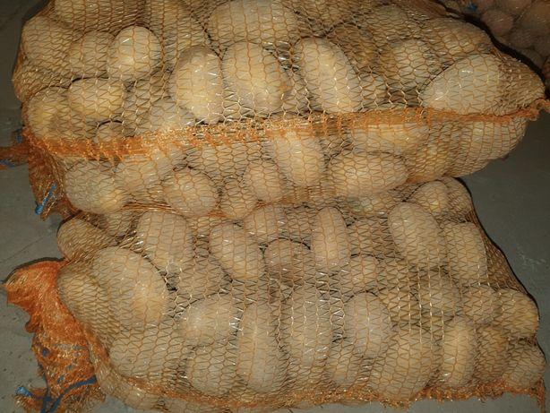 Ziemniaki --- Bellarosa / Agria / Vineta --- cena za worek 15kg