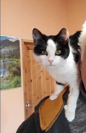 Cudowna czarno-biała kotka szuka domu!!
