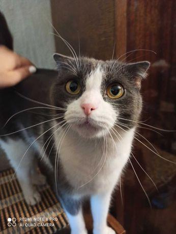 Кот Борюсик срочно ищет дом