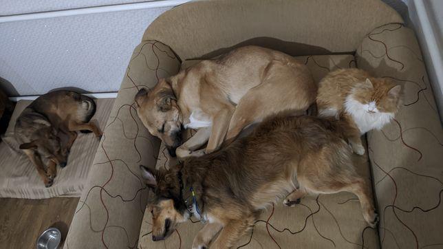 Домашняя передержка собак/киевская область
