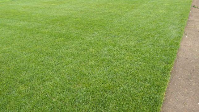 Trawa z rolki, rolowana trawa, darnina, trawnik z rolki, producent