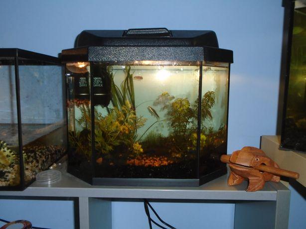 Akwarium aquael 18l z pełnym wyposażeniem