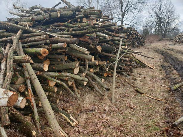 drewno gałęziowe 120 zł mp.