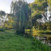 Продаж земельної ділянки Жировка - изображение 1