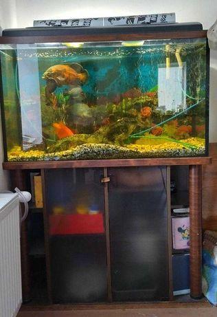 Аквариум с рыбами 240 литров (полный комплект)