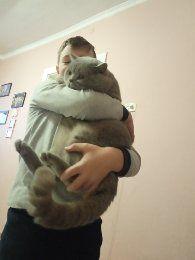 Чистокровний котик. Молодий та досвідчений красень. Чикає в гості