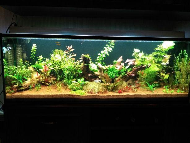 Запуск, чистка, обслуживания аквариума
