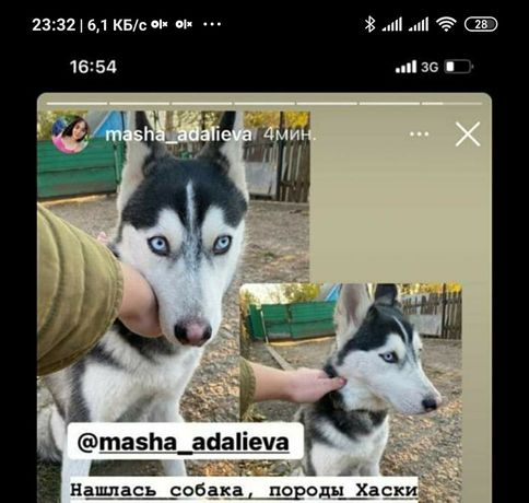 Пропала найдена собака
