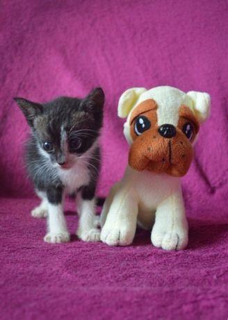 Крошечный котенок, мальчик отдам