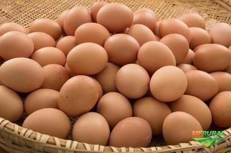 """Ovos Caseiros """"Produção Biológica"""""""