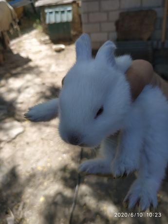 Продам кроля есть маленькие