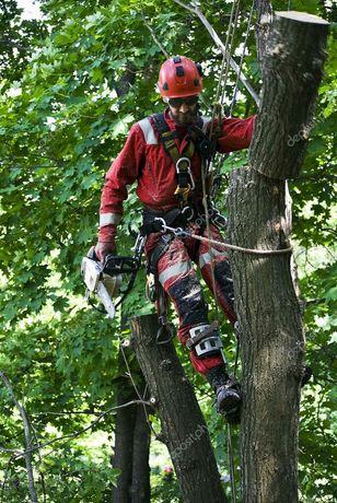 Wycinka i pielegnacja drzew NAJTANIEJ