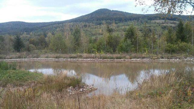 Земля з ставком прудом в горах Карпат