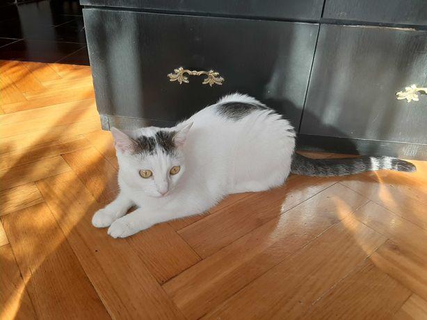 Urocza  biala koteczka szuka domu na stale