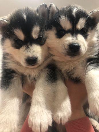 Красивенные малыши