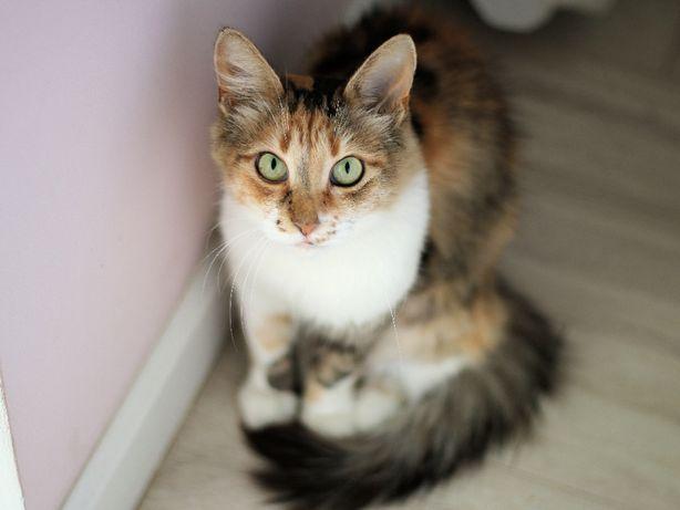 Удивительная умная кошка Эльза 1 год стерилизована