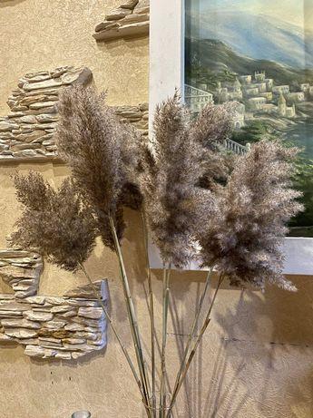 Сухоцвет камыш  пампасная трава тросник декор для дома подарок срочно