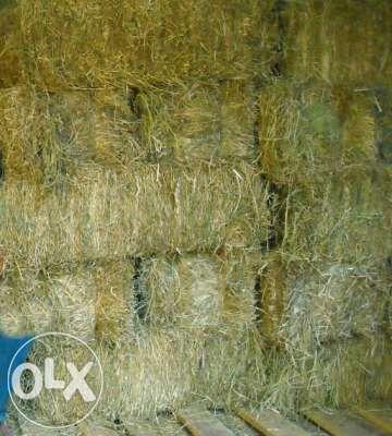 Fardos de Palha colheita 2020 Ponte de Lima - imagem 1