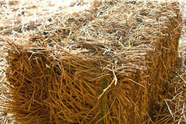 Солома пшеничная в тюках оптом от 30шт. 60 грн.